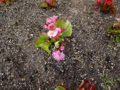 ガーデンふ頭総合案内所前花壇の植替えR3.4.12_d0338682_12365292.jpg