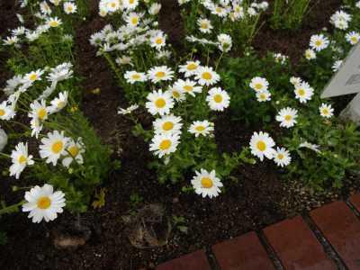 ガーデンふ頭総合案内所前花壇の植替えR3.4.12_d0338682_12370830.jpg