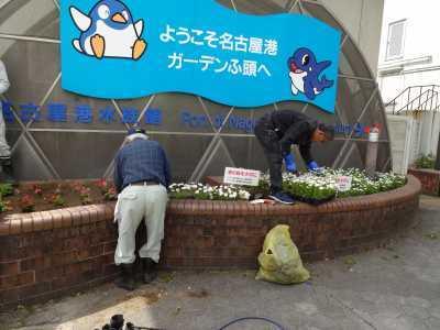 ガーデンふ頭総合案内所前花壇の植替えR3.4.12_d0338682_12382774.jpg