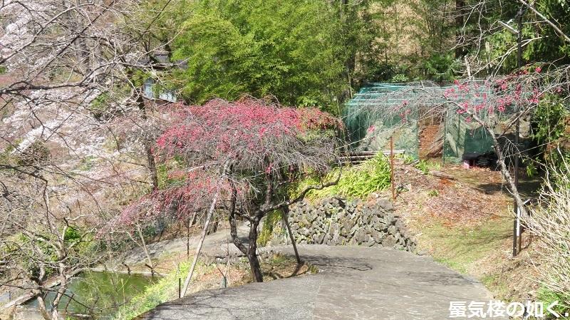 「ゆるキャン△S2」舞台探訪11 なでしこのソロキャン計画その1/3 リン・早川町赤沢宿(第7話)_e0304702_11465498.jpg
