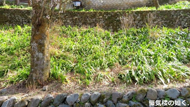 「ゆるキャン△S2」舞台探訪11 なでしこのソロキャン計画その1/3 リン・早川町赤沢宿(第7話)_e0304702_11473451.jpg