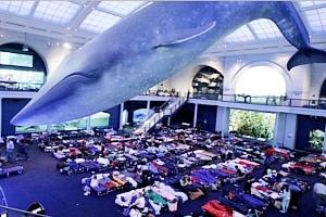NYでは、巨大クジラの下でワクチン接種、自然史博物館の4人まで無料になる入場券ももらえちゃう?!_b0007805_00451776.jpg