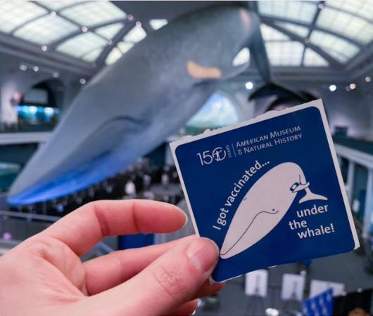 NYでは、巨大クジラの下でワクチン接種、自然史博物館の4人まで無料になる入場券ももらえちゃう?!_b0007805_00510810.jpg