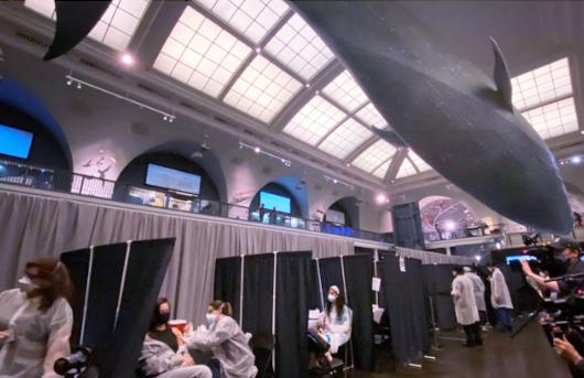 NYでは、巨大クジラの下でワクチン接種、自然史博物館の4人まで無料になる入場券ももらえちゃう?!_b0007805_05372081.jpg