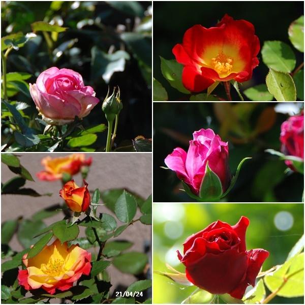叔母見舞い・畑へ・庭の花_c0051105_13185048.jpg
