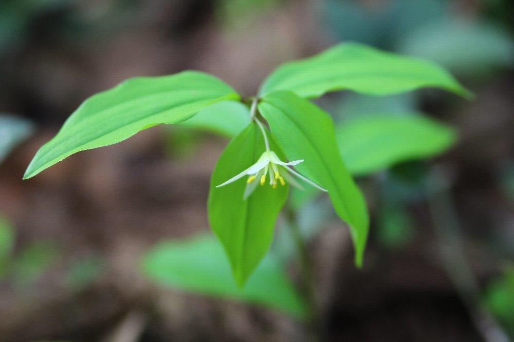 花探訪~白玉の滝でリカバリー_a0309917_16002573.jpg