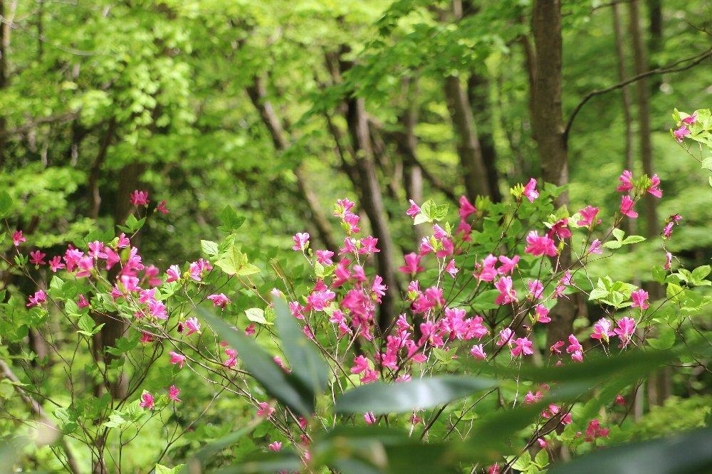 花探訪~白玉の滝でリカバリー_a0309917_16012320.jpg