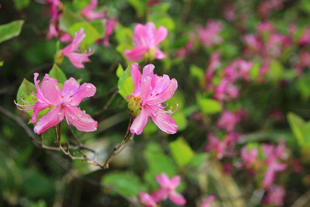花探訪~白玉の滝でリカバリー_a0309917_16014572.jpg