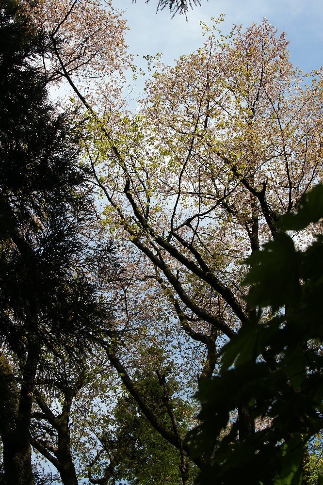 花探訪~白玉の滝でリカバリー_a0309917_16040613.jpg