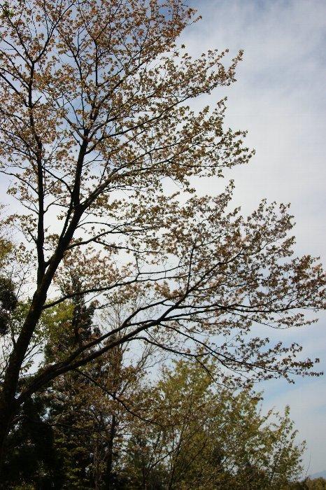 花探訪~白玉の滝でリカバリー_a0309917_16045304.jpg