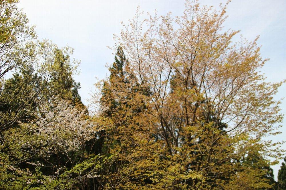 花探訪~白玉の滝でリカバリー_a0309917_16054169.jpg