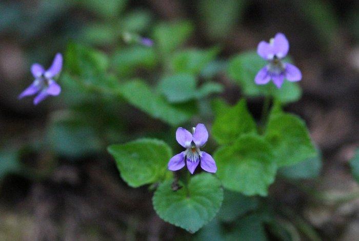 花探訪~白玉の滝でリカバリー_a0309917_16082281.jpg