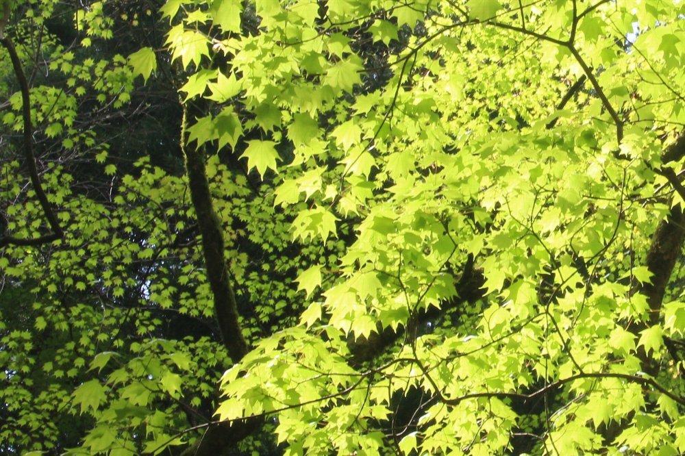 花探訪~白玉の滝でリカバリー_a0309917_16094038.jpg