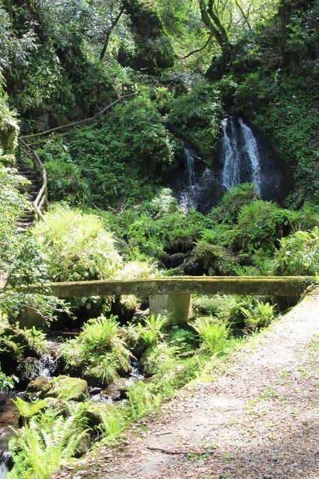 花探訪~白玉の滝でリカバリー_a0309917_16111487.jpg