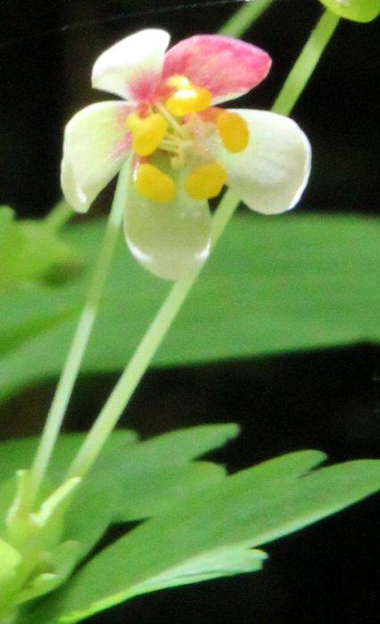 花探訪~白玉の滝でリカバリー_a0309917_16171482.jpg