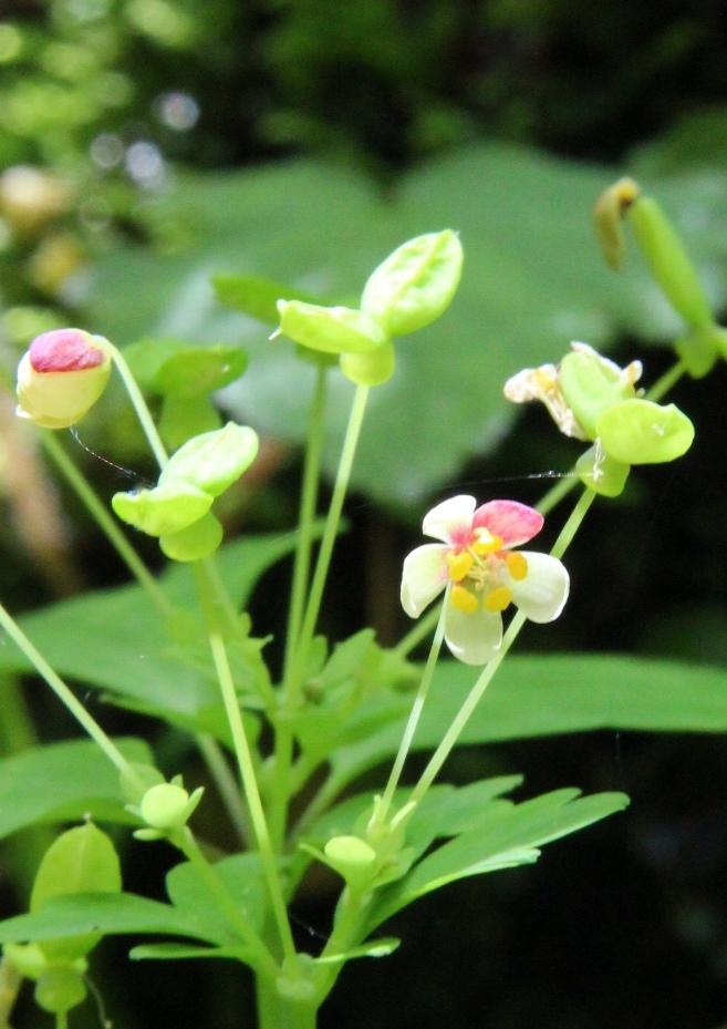 花探訪~白玉の滝でリカバリー_a0309917_16174235.jpg