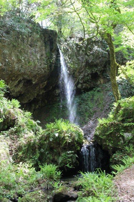 花探訪~白玉の滝でリカバリー_a0309917_16183103.jpg