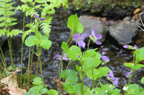 花探訪~白玉の滝でリカバリー_a0309917_16192449.jpg