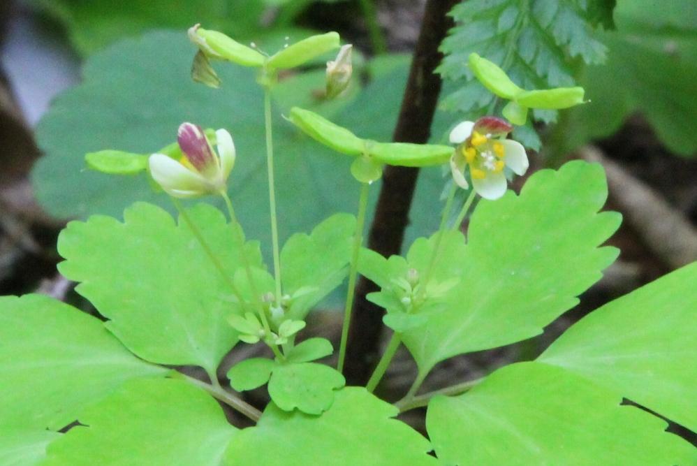 花探訪~白玉の滝でリカバリー_a0309917_16230262.jpg