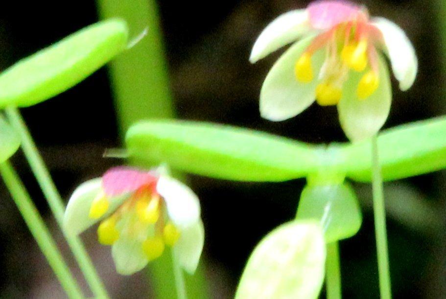 花探訪~白玉の滝でリカバリー_a0309917_16233046.jpg
