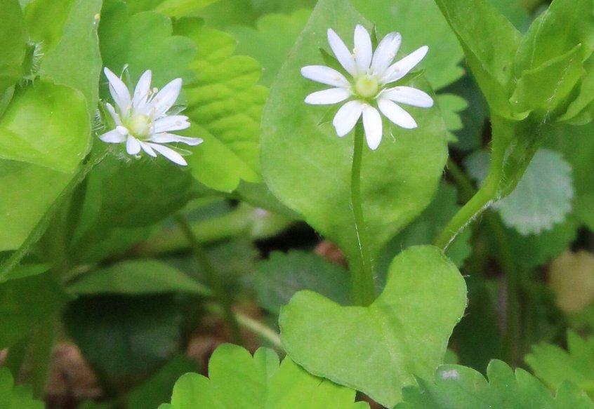 花探訪~白玉の滝でリカバリー_a0309917_16254753.jpg