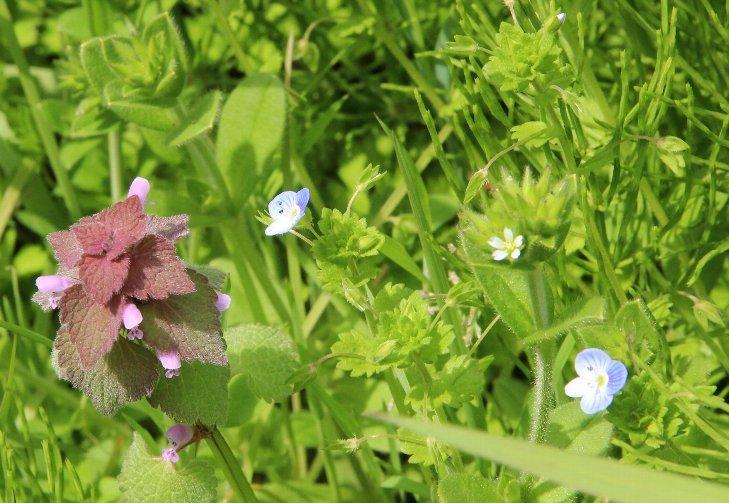 花探訪~白玉の滝でリカバリー_a0309917_16261780.jpg