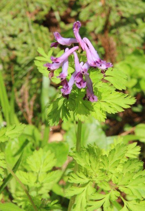 花探訪~白玉の滝でリカバリー_a0309917_16264466.jpg