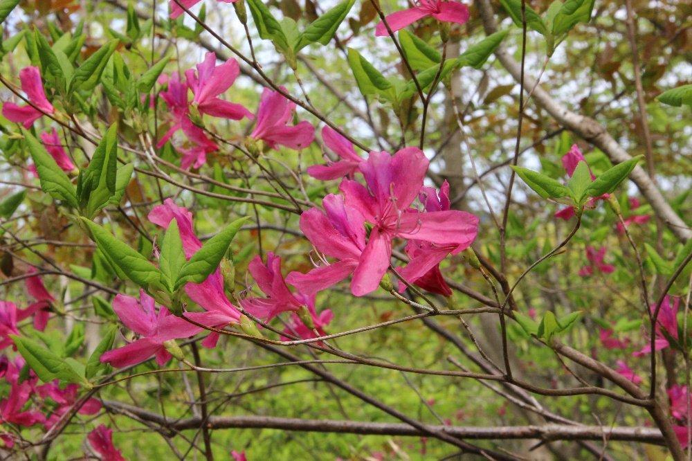 花探訪~白玉の滝でリカバリー_a0309917_16300992.jpg