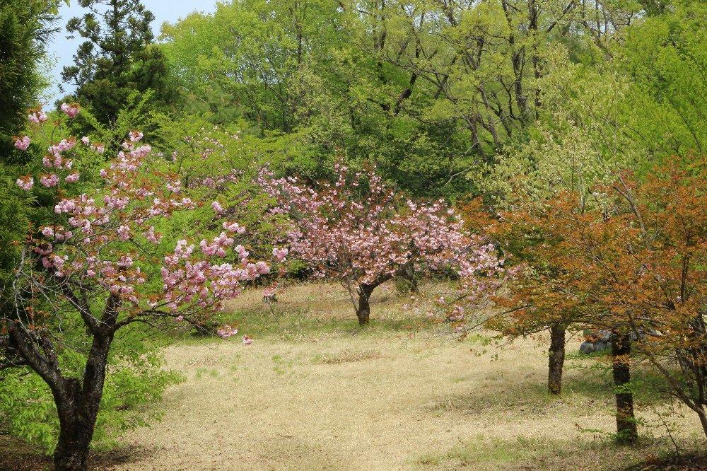 花探訪~白玉の滝でリカバリー_a0309917_16305041.jpg