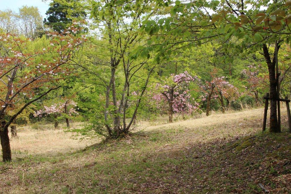 花探訪~白玉の滝でリカバリー_a0309917_16311019.jpg