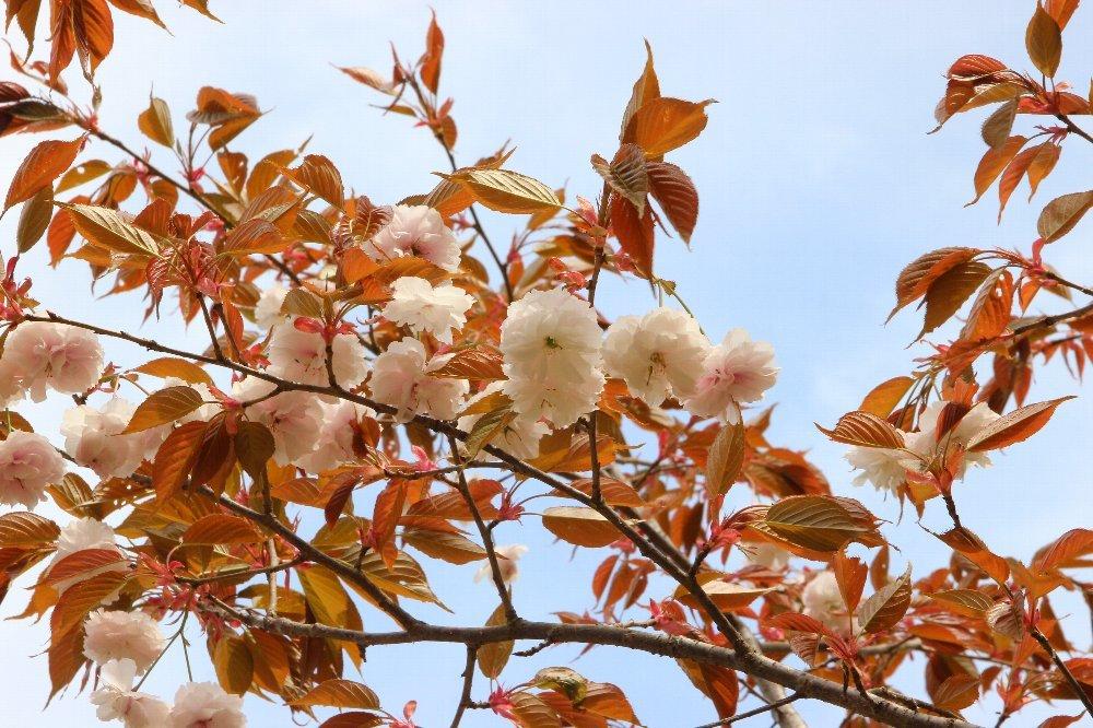 花探訪~白玉の滝でリカバリー_a0309917_16313514.jpg