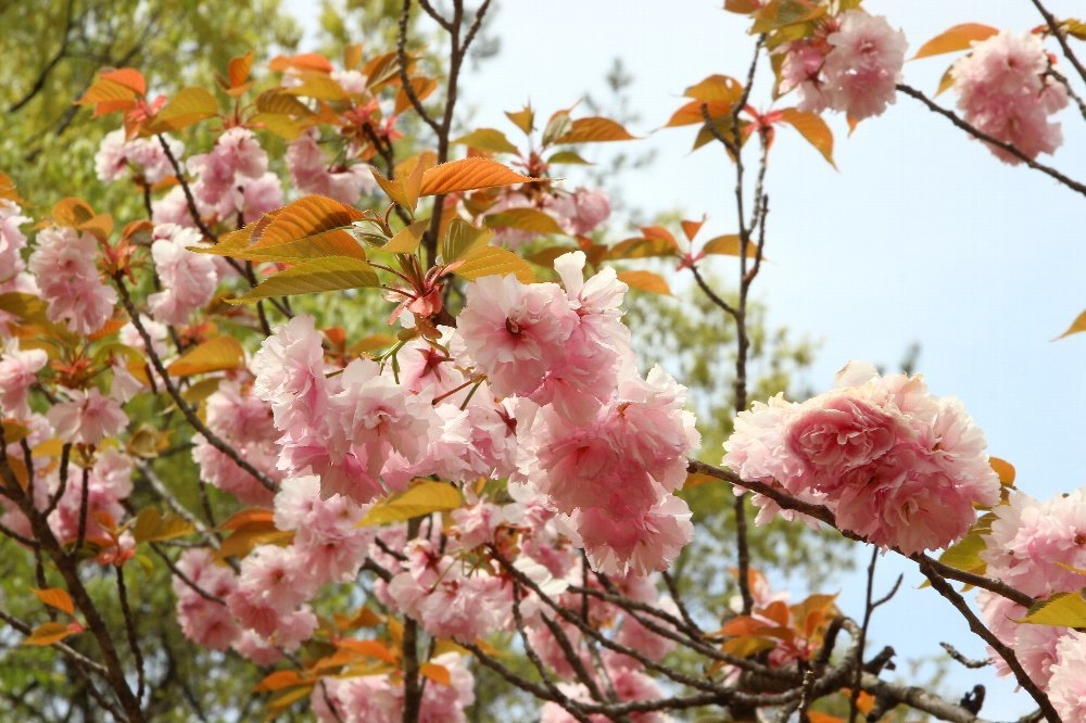 花探訪~白玉の滝でリカバリー_a0309917_16322121.jpg