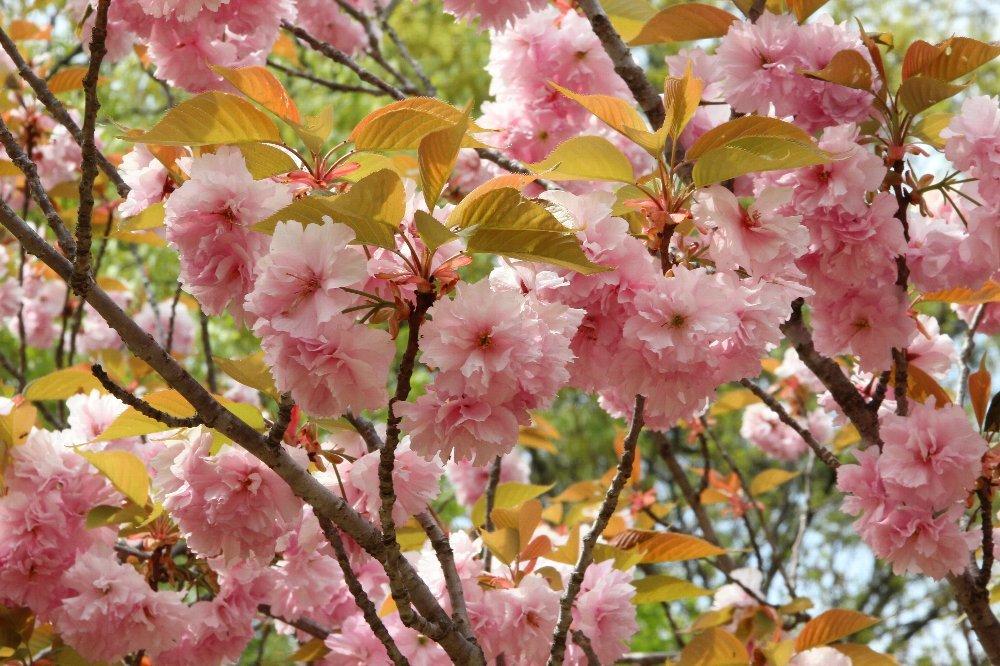 花探訪~白玉の滝でリカバリー_a0309917_16325436.jpg