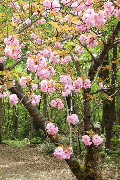 花探訪~白玉の滝でリカバリー_a0309917_16332613.jpg