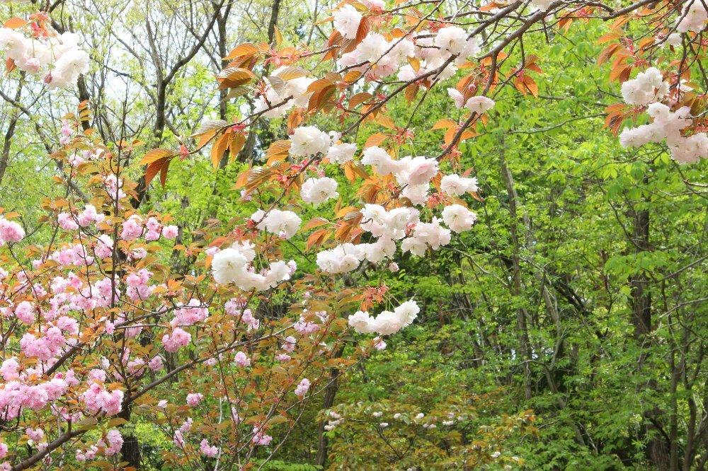 花探訪~白玉の滝でリカバリー_a0309917_16335979.jpg
