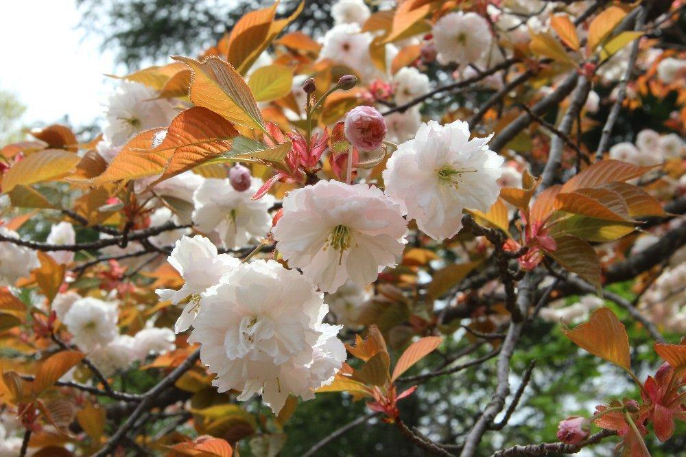 花探訪~白玉の滝でリカバリー_a0309917_16341338.jpg