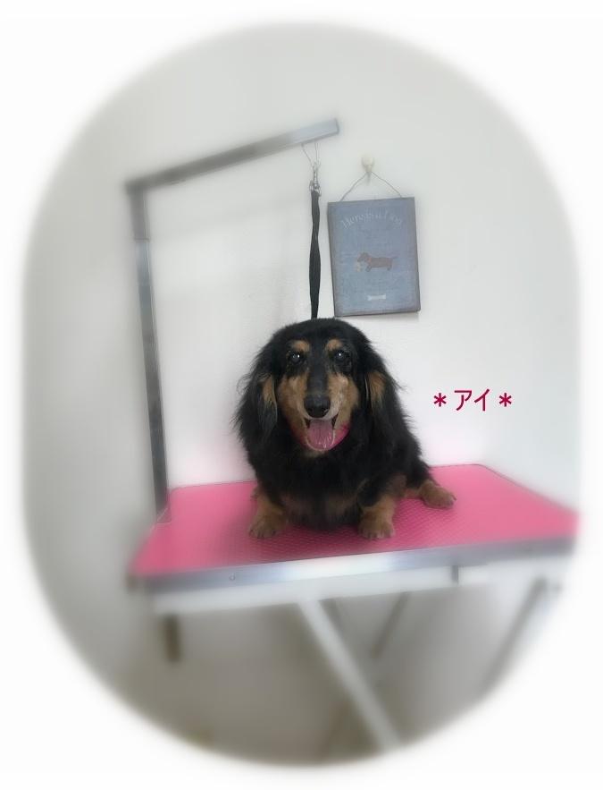 アイちゃん&小春ちゃん_a0315823_19522863.jpg