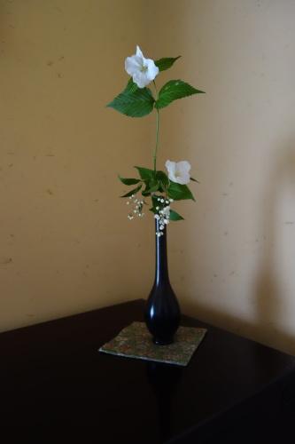 お庭のお花を楽しむ_a0197730_02161640.jpg