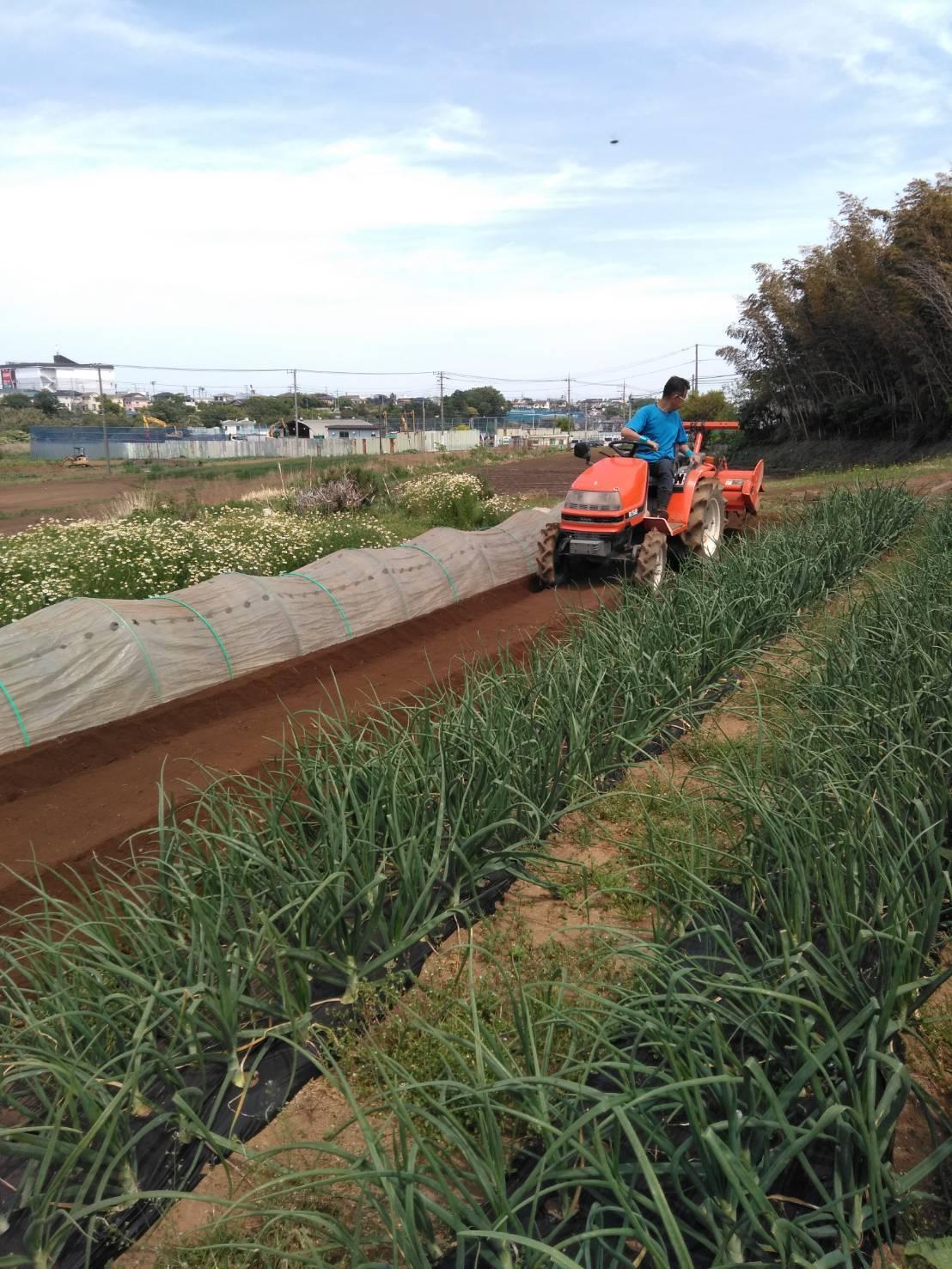 今朝は 長ネギの仮植の畝作りです_c0222448_14583598.jpg