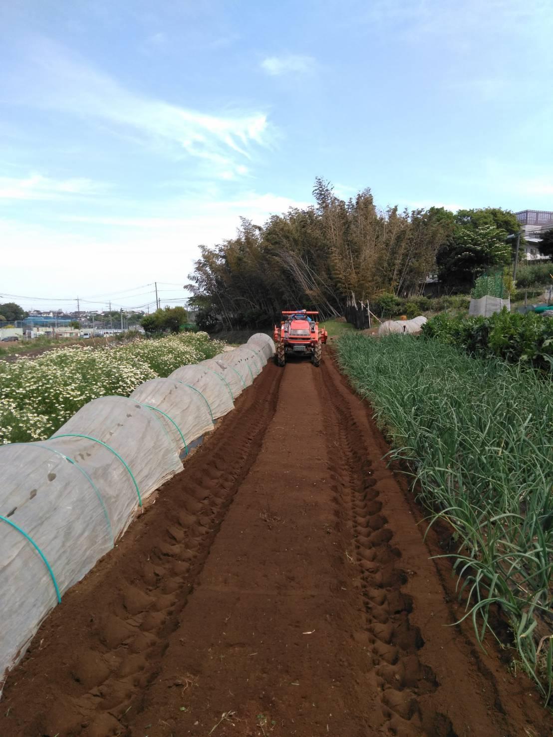 今朝は 長ネギの仮植の畝作りです_c0222448_14584271.jpg