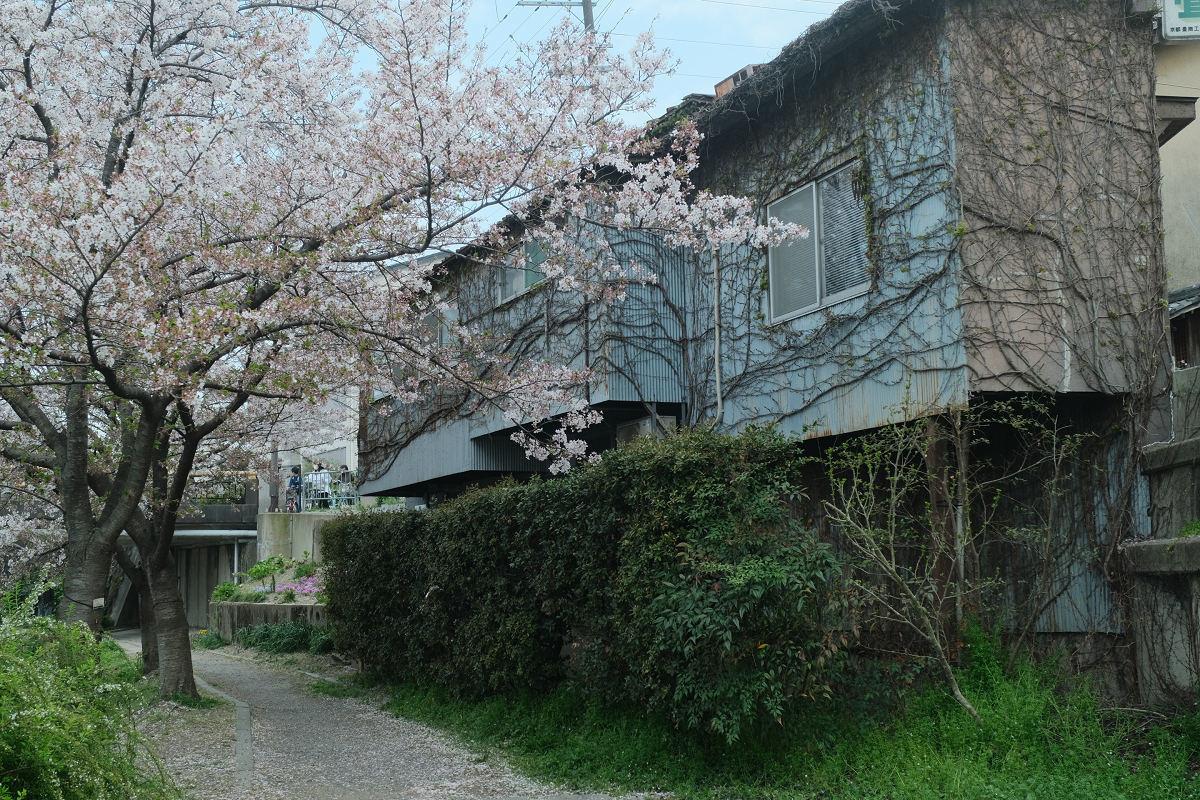 京都 桜 2021_f0021869_22192661.jpg