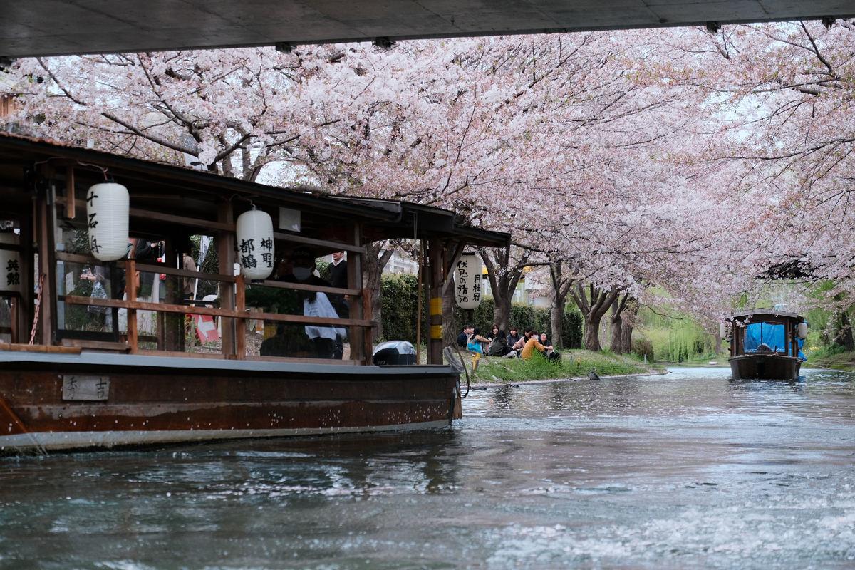 京都 桜 2021_f0021869_22201445.jpg