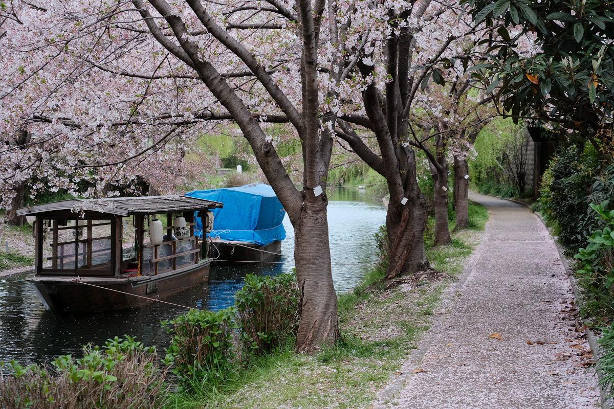 京都 桜 2021_f0021869_22210197.jpg