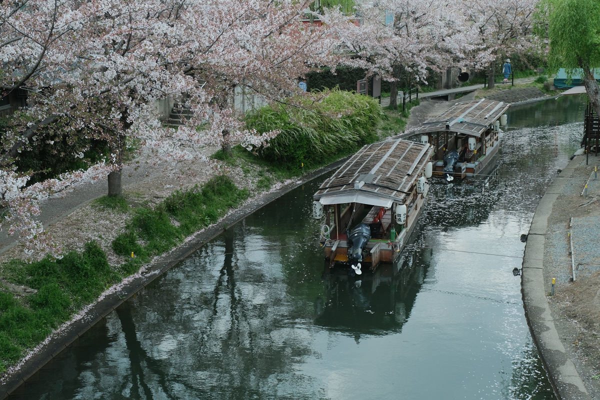 京都 桜 2021_f0021869_22234584.jpg