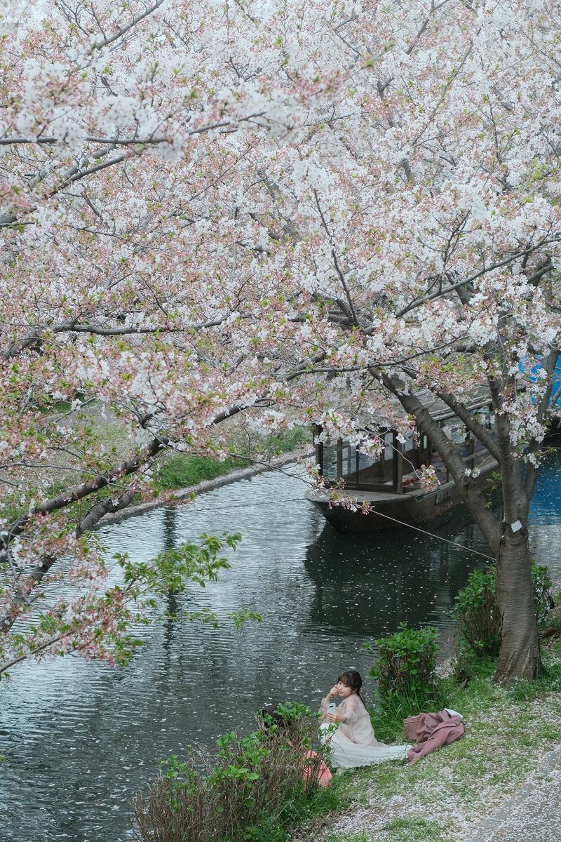 京都 桜 2021_f0021869_22241767.jpg