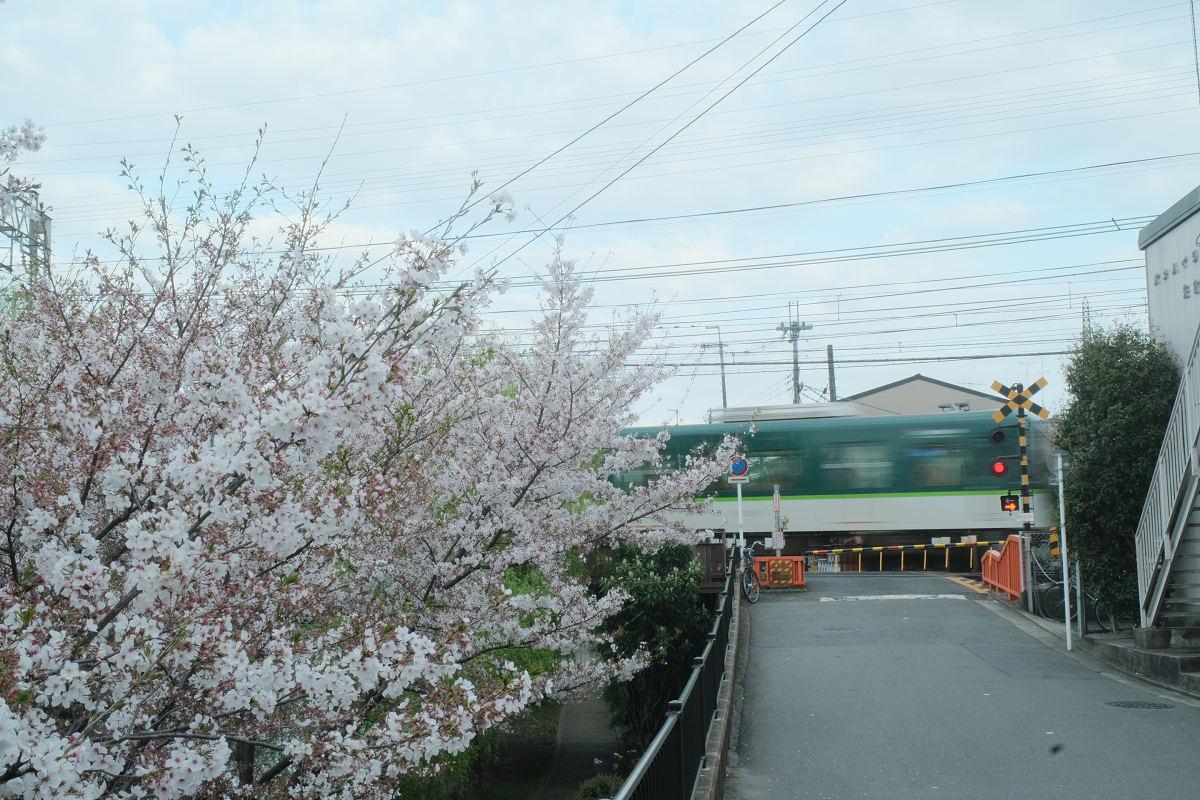 京都 桜 2021_f0021869_22243500.jpg