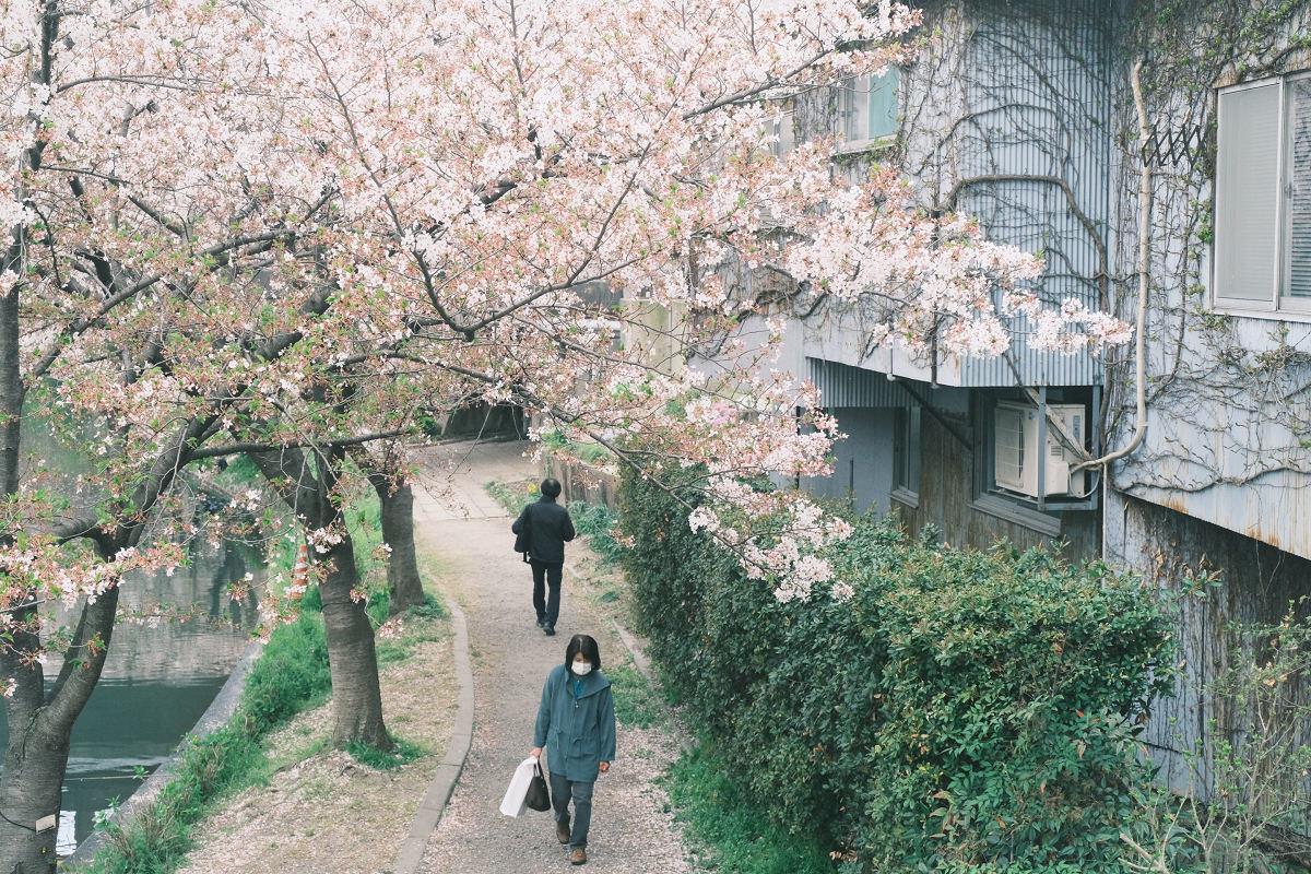 京都 桜 2021_f0021869_22245601.jpg