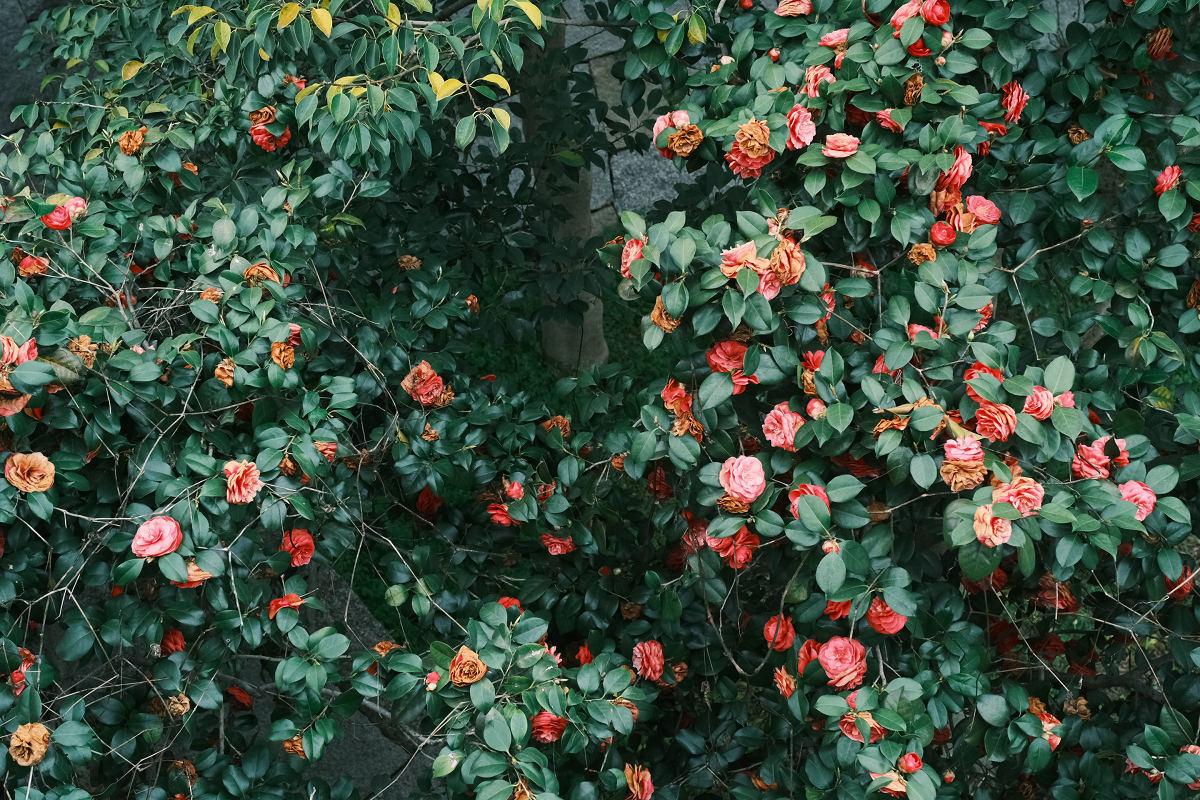 京都 桜 2021_f0021869_22264644.jpg