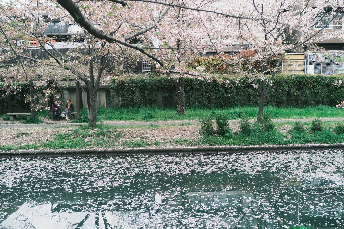 京都 桜 2021_f0021869_23592178.jpg
