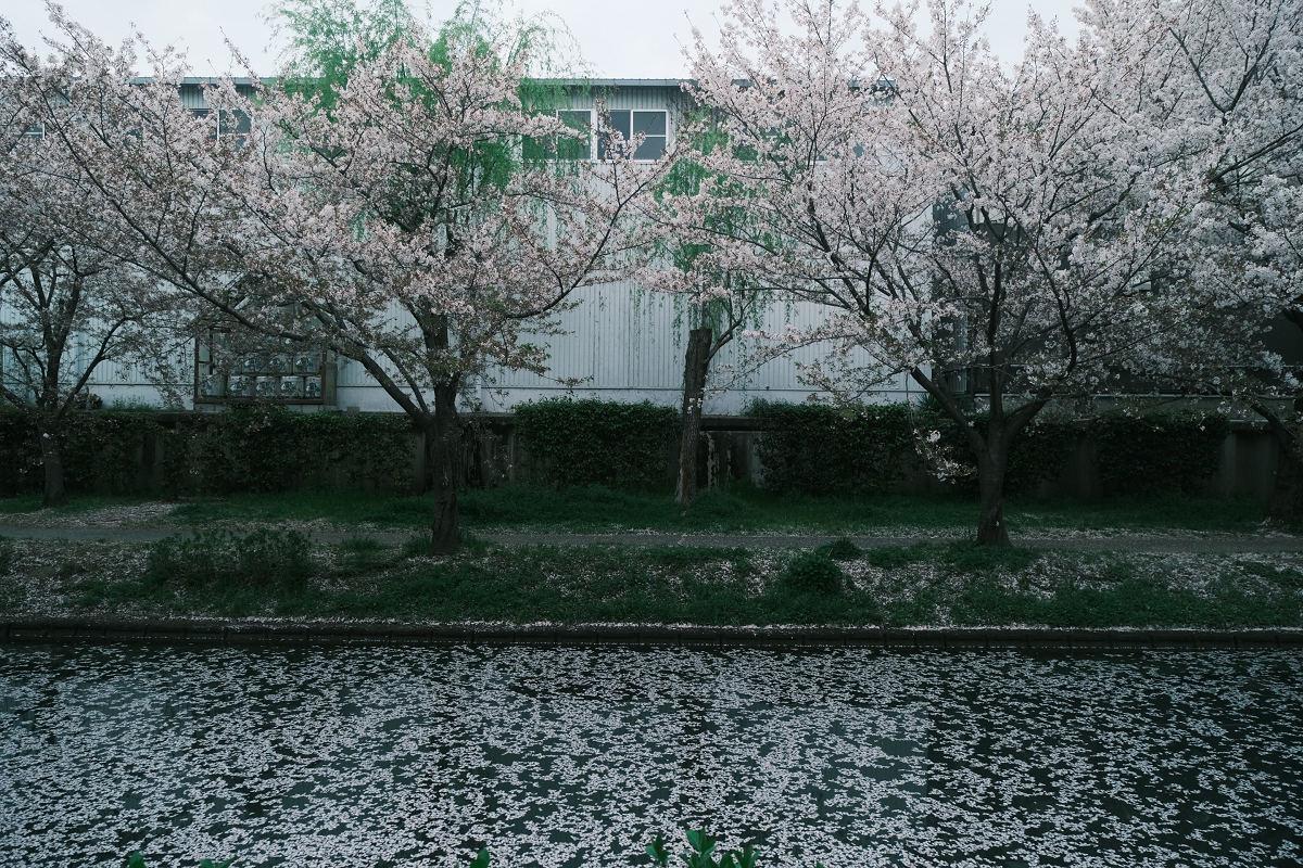 京都 桜 2021_f0021869_23594666.jpg